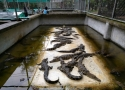 عکس پارک سنگی پاتایا Million Years Stone Park  Pattaya Crocodile Farm