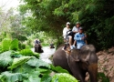 دهکده فیل ها Elephant Village Pattaya